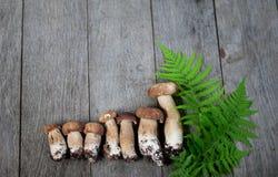 Porcini-Pilz auf hölzernem Hintergrund Stockfoto