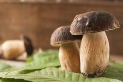 Porcini plocka svamp stensopp på en trätabell Arkivbilder