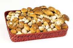 Porcini Stock Photos