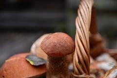 Porcini in un canestro Fotografie Stock Libere da Diritti