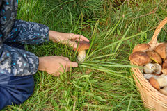 Porcini in un canestro, Forest Mushroom Fotografia Stock Libera da Diritti