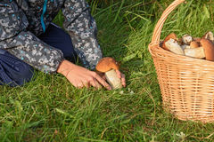 Porcini in un canestro, Forest Mushroom Immagine Stock Libera da Diritti