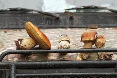 Porcini van het bos op vrachtwagenbonnet royalty-vrije stock afbeeldingen