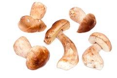 Porcini van Shrooms Stock Afbeeldingen