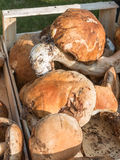 Porcini vermehrt sich Ernte wodden herein Schüssel explosionsartig stockfotografie
