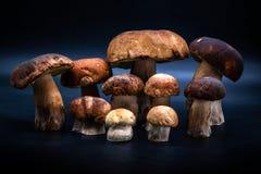 Porcinini agradable en salud oscura de la comida del fondo Imagenes de archivo