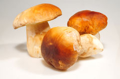 Porcino mushrooms Royalty Free Stock Images