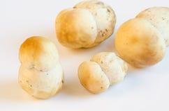 Porcino mushrooms Stock Photo