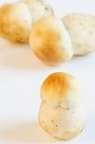 Porcino mushrooms Stock Image