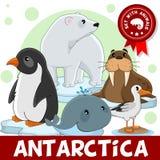 3 porciones Animales de la Antártida Imagen de archivo libre de regalías