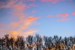 Porciones de árboles con el cielo azul y las nubes anaranjados rojos Fotografía de archivo libre de regalías