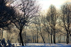 Porciones de árboles en invierno Imagenes de archivo