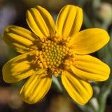 Porciones de amarillo Imagen de archivo