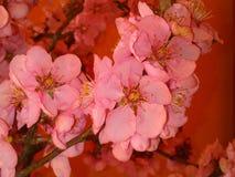 Porciones de flores Fotografía de archivo
