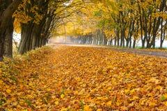 Porciones de hojas amarillas a lo largo del camino fotos de archivo