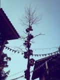 Porciones de la casa de pájaros en un árbol Imagen de archivo libre de regalías