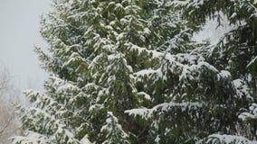 Porciones de nieve en las ramas de árbol almacen de metraje de vídeo