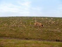 Porciones de pan afuera en la colina para los pájaros, consumición de la hierba del perro fotos de archivo