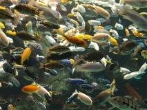 Porciones de pescados Fotos de archivo