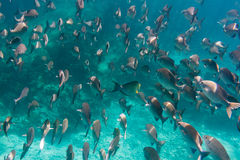 Porciones de pescados Imagenes de archivo