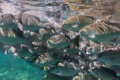 Porciones de pescados Imágenes de archivo libres de regalías