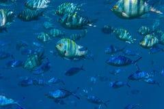 Porciones de pescados Fotografía de archivo libre de regalías