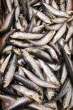 Porciones de pescados en el mercado Fotos de archivo libres de regalías