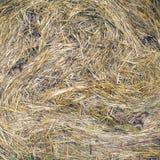 Porciones de primer seco torcido del heno Imagen de archivo libre de regalías