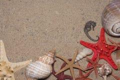 Porciones de Seashells y de caballo de mar Fotografía de archivo