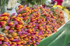 Porciones de tulipanes en el mercado de la flor foto de archivo
