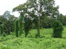 Porciones de verde Imagenes de archivo