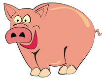 Porco Imagem de Stock