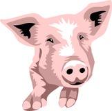 Porco Fotografia de Stock Royalty Free