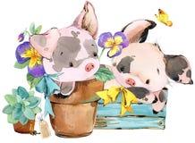 Porco bonito ilustração do animal da aquarela dos desenhos animados Fotos de Stock Royalty Free