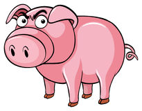 Porco com cara irritada Foto de Stock