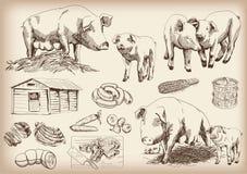 Porco-criação de animais Fotos de Stock Royalty Free
