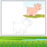 Porco da coloração Fotos de Stock Royalty Free