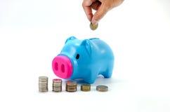 Porco da economia com dinheiro e calculadora Fotos de Stock Royalty Free