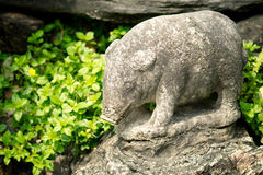 Porco de pedra Imagens de Stock Royalty Free