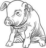 Porco do bebê ilustração stock
