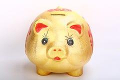 Porco do ouro Imagens de Stock Royalty Free