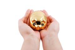 Porco dourado Fotografia de Stock Royalty Free