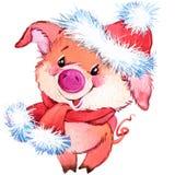 Porco e partido engraçados Imagens de Stock Royalty Free