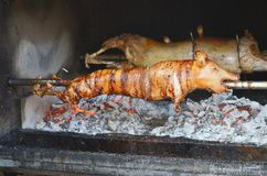 Porco grelhado Porco Roasted fotos de stock royalty free