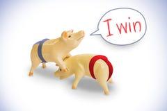 Porco na competição Foto de Stock