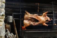 Porco na grade Fotos de Stock Royalty Free