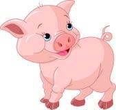 Porco pequeno do bebê Imagens de Stock