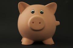 Porco Piggy Foto de Stock