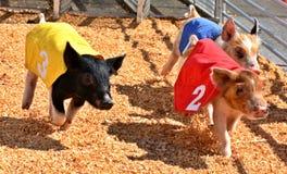 Porco que compete, iFair do estado de Oklahoma, Oklahoma City imagem de stock