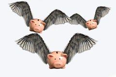 Porcos do vôo Imagens de Stock Royalty Free